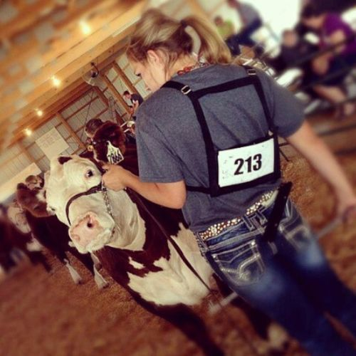 Day 8, Stockshowlife I love this picture! Surechamp Scphotoaday