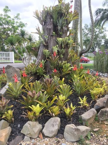 Landscape Wildorchid Orchid Plant Growth Nature Day Beauty In Nature No People Cactus Green Color Tree Garden Flower Outdoors Sunlight Sky Flowering Plant