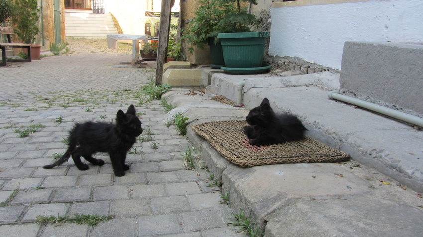 Cyprus Cyprus Cat Nikosia Animal Themes Architecture Building Exterior Built Structure Cat Day Domestic Animals Domestic Cat Feline Full Length Mammal No People One Animal Outdoors Pets Sitting Steps