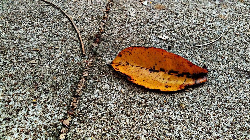 Orange Leaf Leaf 🍂 🍂Fall🍁 Close-up Beauty Of Fall No People