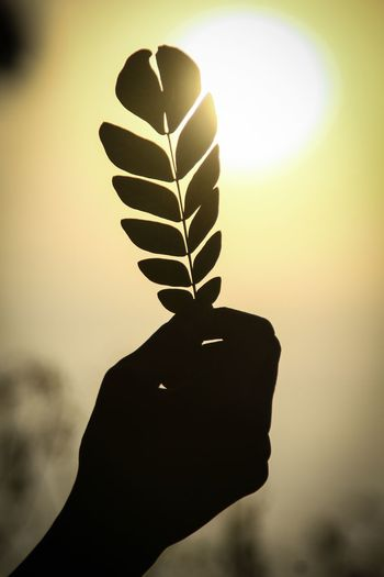 Close-up of hand holding silhouette leaf against sky during sunset