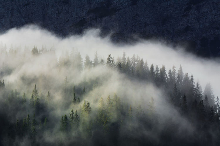 High angle view of trees amidst clouds