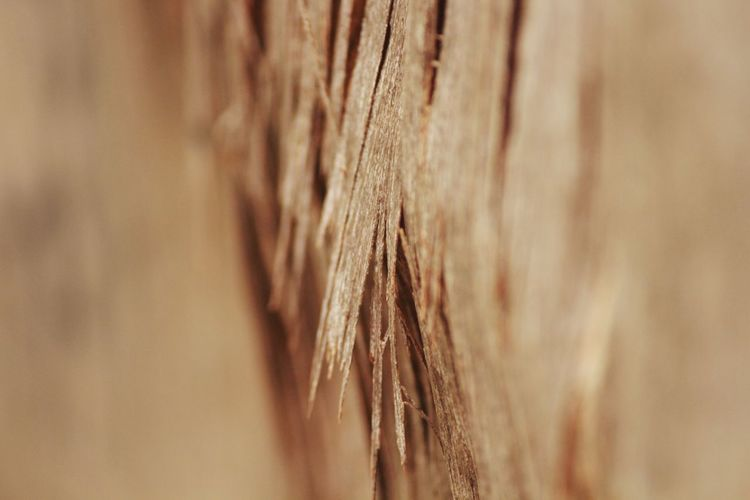 wood EyeEm Selects Backgrounds Textured  Brown Full Frame Close-up Fiber Thick