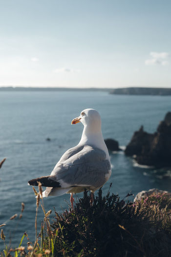Seagull perching on a rock against sky