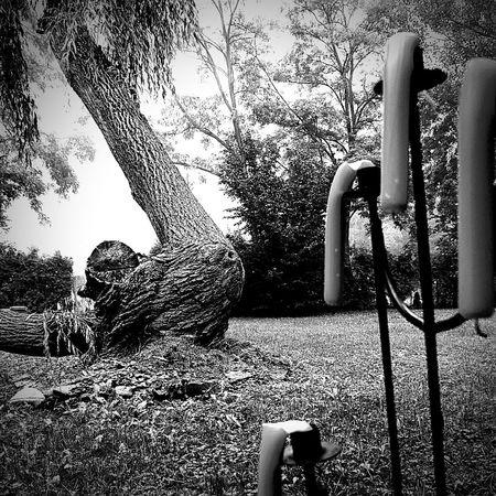 Shades Of Grey Light And Shadow Reflection Foggy Morning Monochrome Black & White Schlicht