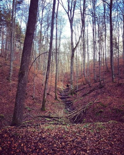 Waldspaziergang Wald Nature_collection EyeEm Natue Lover Taking Photos Enjoying Life Nature Schönbuch Forrest Welcome Weekly