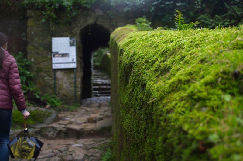 Moss ground