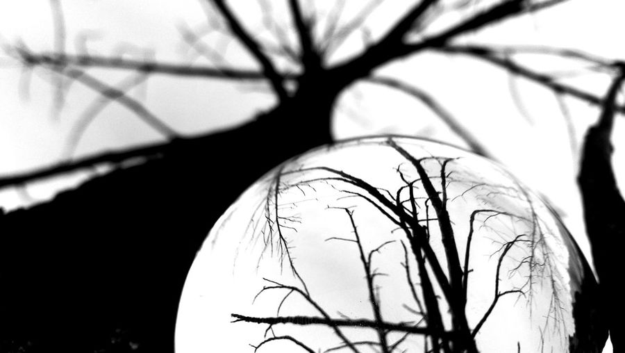 Tree Close-up Branch No People Nature Day Sunset Sunrise Shadow Abstract Sunset Silhouettes Blackandwhite Outdoors White Background Beauty Tree Sphere Ball Transparency Perspectives On Nature Black And White Friday