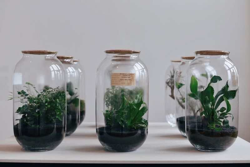 Close-up of plants in glass jar on table