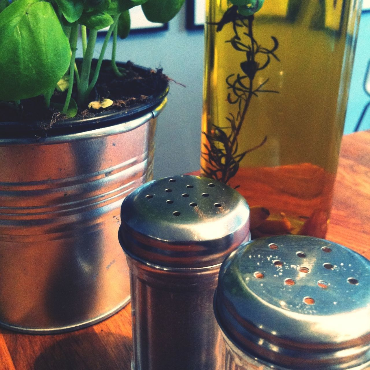 close-up, container, salt shaker, no people, table, indoors, plant, day, freshness