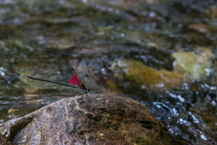 Dragonfly Riverside Animals In The Wild Close-up Insect Nature One Animal Outdoors River