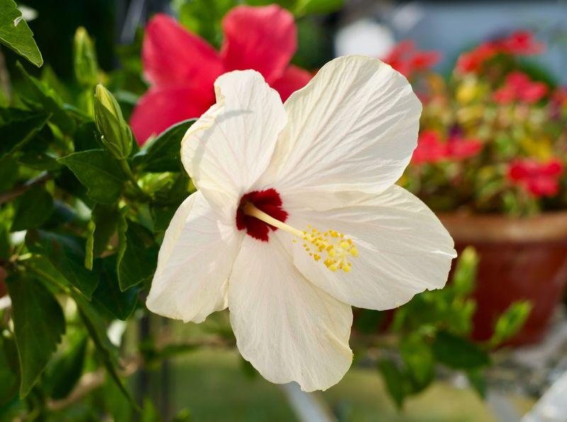 Flowering Plant Flower Fragility Petal Plant Beauty In Nature