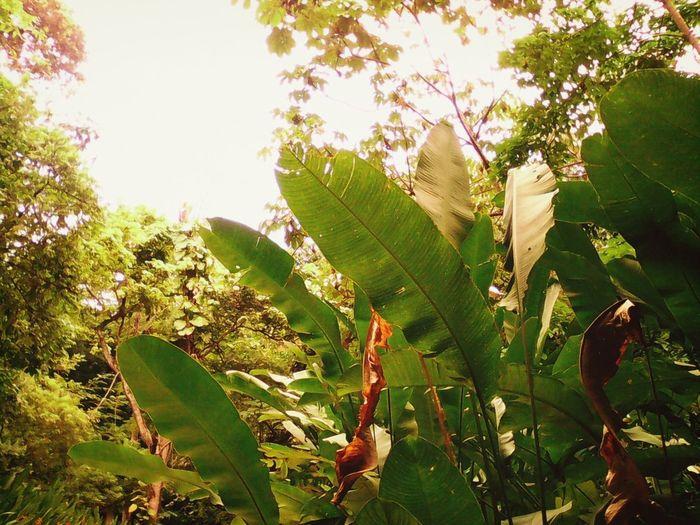 Flowers,Plants & Garden EyeEm Nature Lover @pure Nature Collection Nature_collection