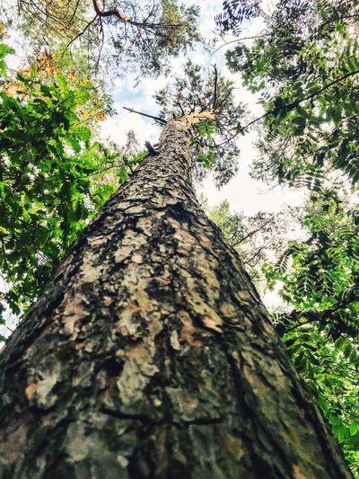 Mobilephotographyaphy] ilephotography EyeEm Best Shots EyeEm Best Edits Nature_collection EyeEm Nature Lover Trees Beautiful Nature nat