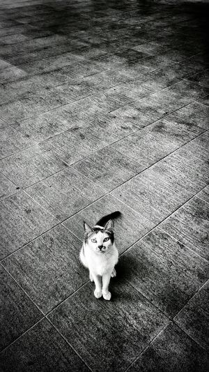 Rule Of Thirds Cat staring at Kokopaps Lg G2 Eyeem Philippines Animals Black & White Mission Mobile Photography Snapseed