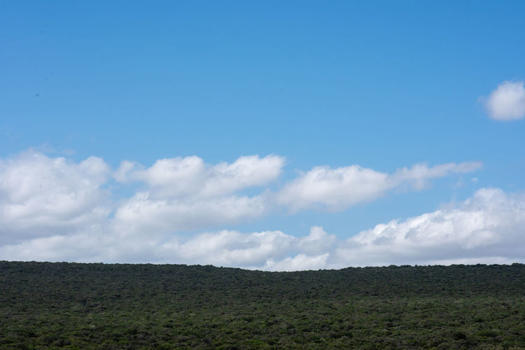 nature Sky Cloud - Sky Scenics - Nature Beauty In Nature Tranquil Scene Tranquility Landscape Environment Nature Day Non-urban Scene No People Land Plant Idyllic Copy Space Outdoors Blue Field Horizon Over Land Arid Climate