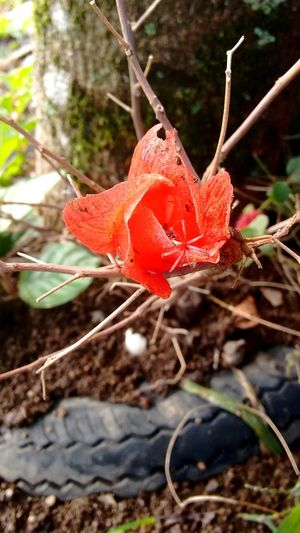 Naturelovers Naturaleza Flower Photography