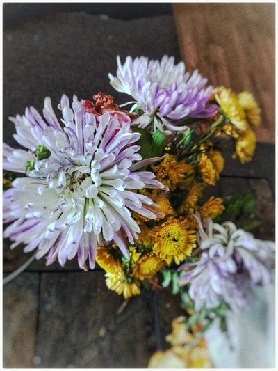Flowers No People Close-up Nature Flower Flower Head Freshness