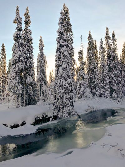 Winter dream Forest Scandinavia Solitude Sälen Cross Country Skiing Sweden Snowcoveredtrees Nature Sky Water Tree Beauty In Nature Day Outdoors Winter Tranquility Scenics - Nature Sunlight No People