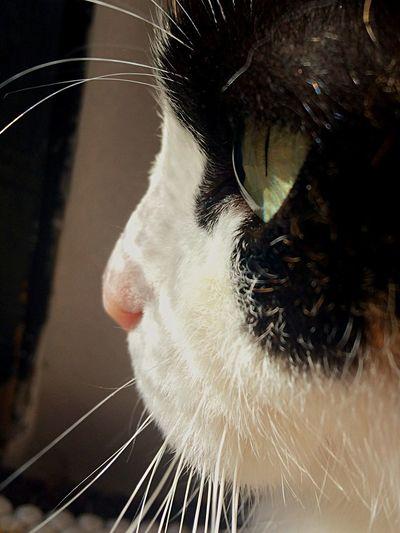 Cat Cats Pets