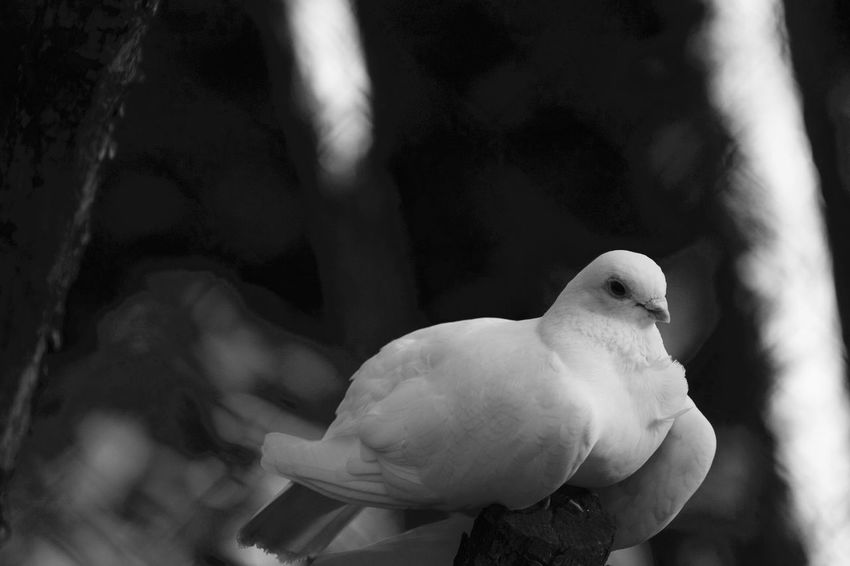 Blackandwhite Black And White Animals Animal Photography Freedom EyeEm Nature Lover EyeEm Best Shots - Black + White EyeEm Best Shots - Nature Popular Photos Naturelovers