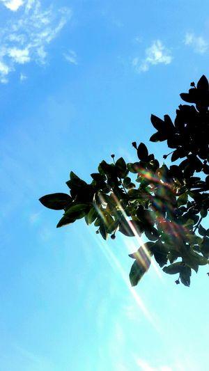 Sky And Clouds Skyporn Sun Rays Sunporn Sunlight ☀ EyeEm Vision EyeEm Nature Lover Pattern Pieces