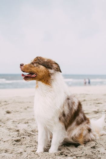 The look on our dogs face when she saw the sea for the first time 😂👍 Animal Themes Beach Sea Domestic Animals One Animal Pets Horizon Over Water Dog Focus On Foreground Beauty In Nature Nature Tranquility Water Sand Mammal Shore Wave Day Zoology Outdoors Eye4photography  EyeEm Nature Lover EyeEm EyeEm Gallery The Week On Eyem