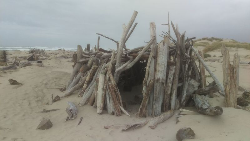 north jetty, florence, oregon. driftwood, beach, sand, clouds. Sand Sky Tranquility Nature Abundance Scenics Tranquil Scene Shore Dead Plant Outdoors Driftwood Heap Extreme Terrain Non-urban Scene Large Group Of Objects WoodLand No People.