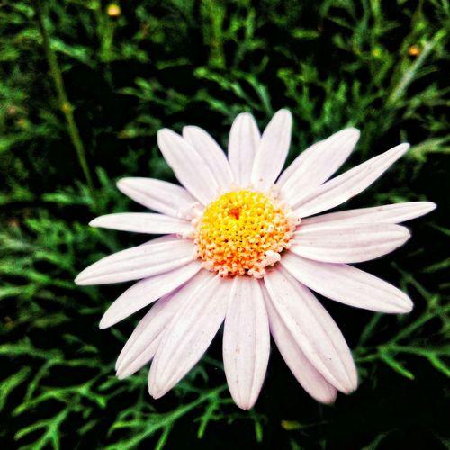 Putih bersih... Lenovovibex Flower Flowers, Nature And Beauty Flowers,Plants & Garden Beautiful Flower Bunga Bungabunga