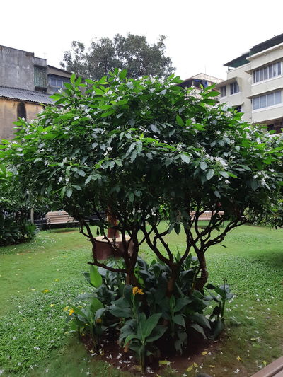 Small Tree Small Tree Small Trees Occur Small Flower Plant Small Tree Trunk Flower Tree Blossom Flower Tree Branches Flower Trees White Flower Tree Lovers Garden Tree Small Trees Tree Front Or Back Yard Architecture Courtyard  Blooming Ornamental Garden Garden Path Yard #urbanana: The Urban Playground