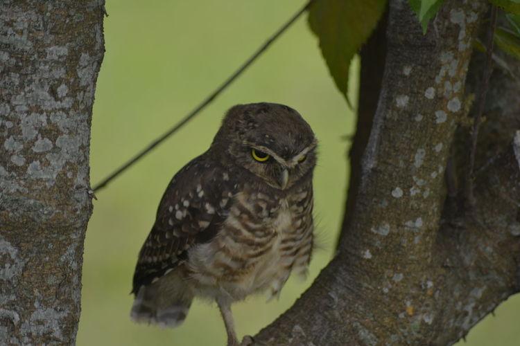 #AngryBird Animals In The Wild Bird Wildlife
