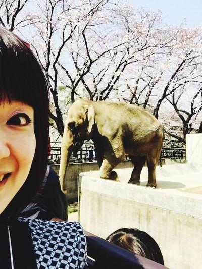 オトナになっても動物園楽しい! Animals Zoo Animals  Zoo Elephant Elephant ♥