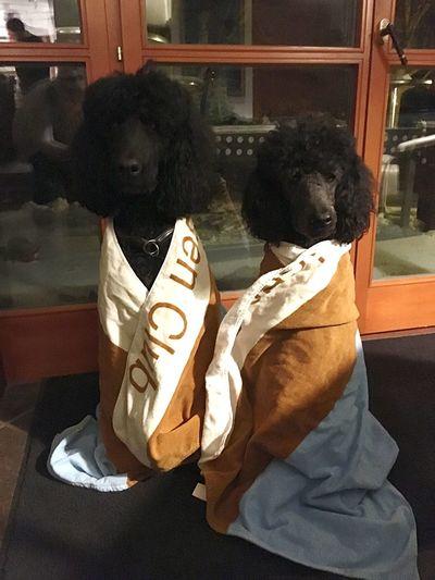 EyeEmNewHere Pets Dog Poodel Schnee Nasser Hund