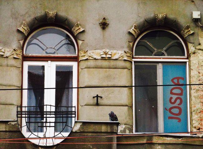 Jósda Oracle Miskolc Pigeons Windows Hungarian Architecture Frontside