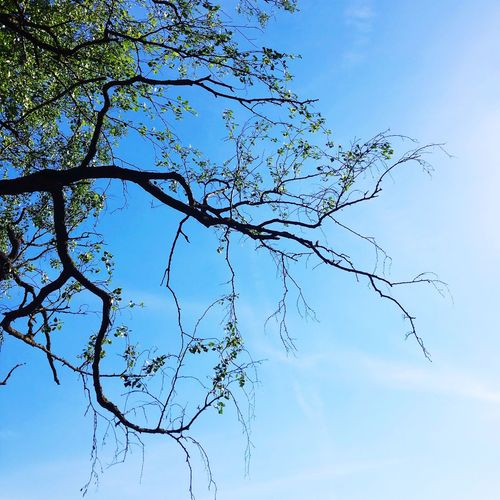 Branches Tree Sky Weather Summer
