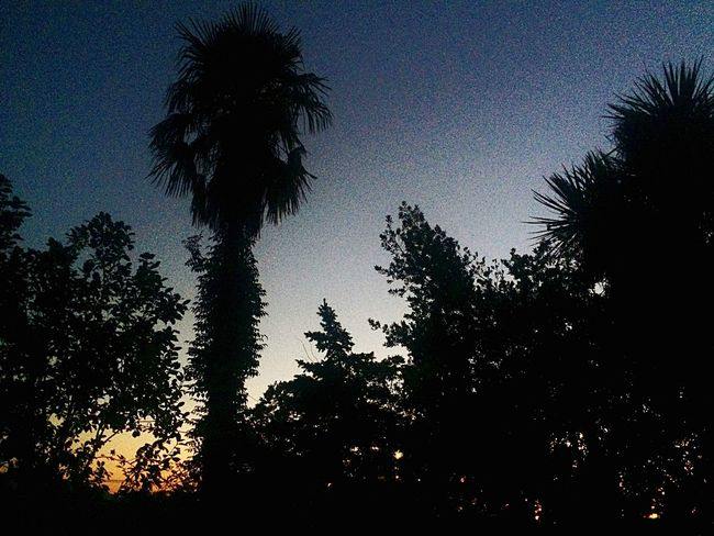 Photo by me 📸🌷 Tree Palm Tree Silhouette Low Angle View Growth Tree Trunk Beauty In Nature Sky Nature Tranquility No People Dusk Scenics Outdoors Tranquil Scene Sunset Day Branch (null)