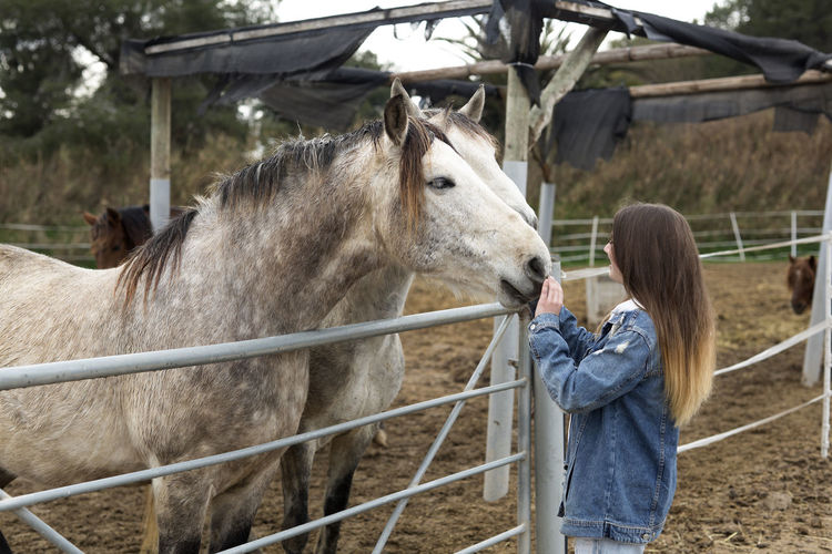 Teenage girl touching a horse in a stable - Refuge of Rojales, province of Alicante in Spain. 16 Years Back Barn Horses Livestock Spanish Woman Adolescent Affection Animal Themes Caucasian Domestic Animals Herbivorous Horse Livestock Love To The Animals Mammal One Person People Real People Refuge Shelter Teen Teenage Girls Teenager