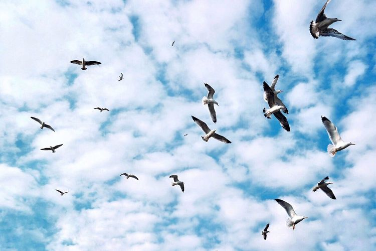 Flying Bird Cloud - Sky Sky Animal Themes Animals In The Wild Mid-air Low Angle View Spread Wings Freedom Nature Outdoors Large Group Of Animals No People Animal Day Flock Of Birds Backgrounds Migrating Beauty In Nature