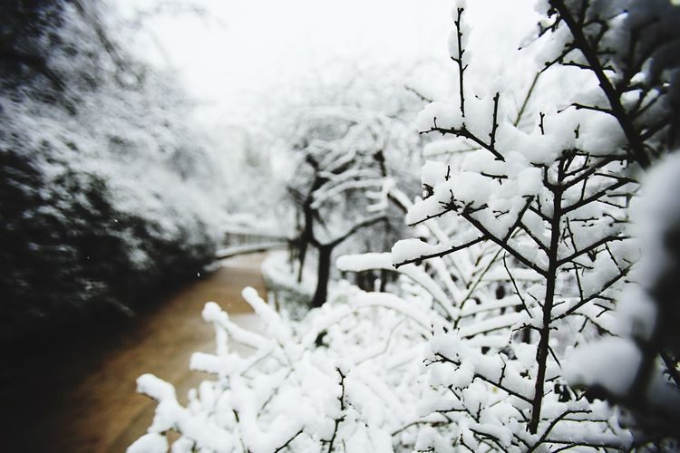 Snow Winter Snow Cold Temperature Nature Weather No People Beauty In Nature Day Tranquility Tree Outdoors Scenics Close-up Freshness