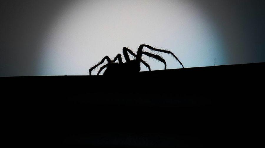 Spider Blackandwhite Monochrome!!!