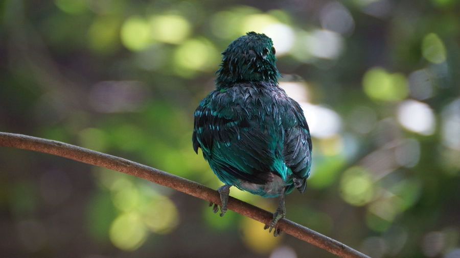 Bird Animal Themes Perching One Animal Animals In The Wild Animal Animal Wildlife Vertebrate Focus On Foreground Day Tree No People Branch Close-up Plant Nature Full Length Outdoors Beak Green Color Stick - Plant Part