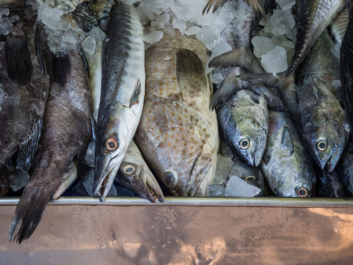 Close-Up Of Fish For Sale At Mahachai Fish Market, Thailand
