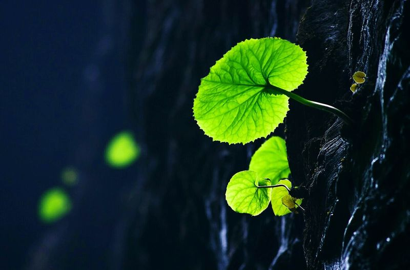 Sometimes, we see green, we see hope, we see life start to carve its' state. Open Edit Life Popular Green Leaves EyeEm Best Shots