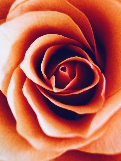 🧡 Flower