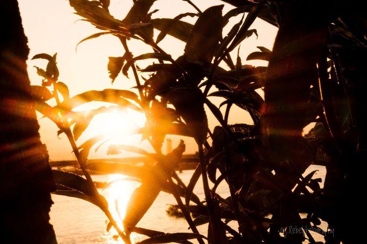 Capture the sun