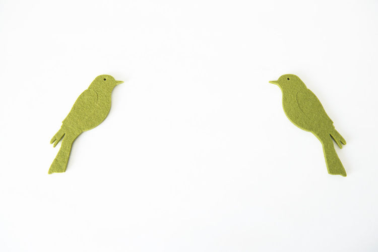 Close-up of birds perching on white background
