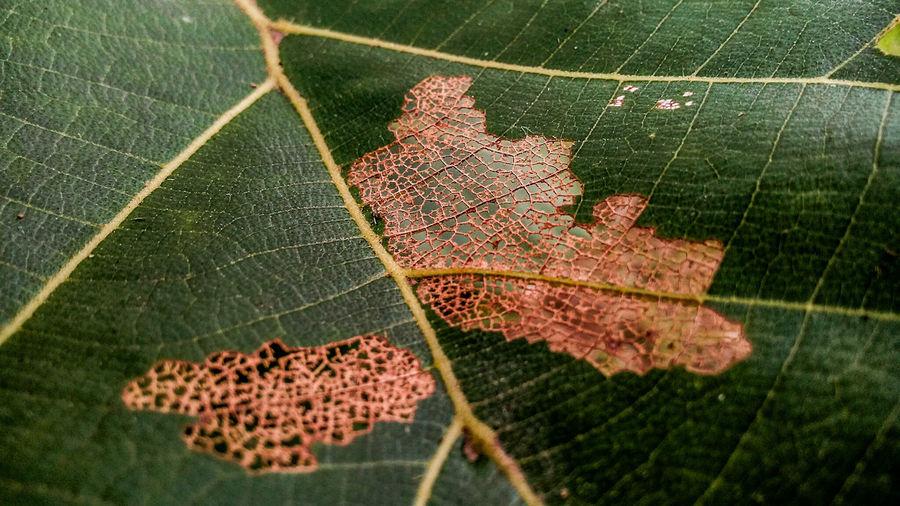 Close-up of rotting leaf
