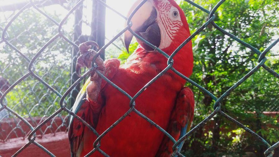Detras de las rejas sin cometer ningun delito. Bierd Protection Animal Themes Nature Close-up