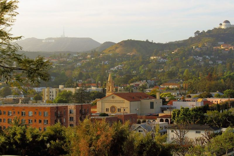 My town from above streets church observatory trees hollywood view Adopted To The City Adapted To The City