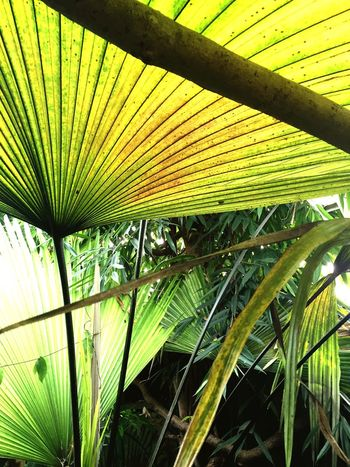 Leading Lines but to where? Rainforest Leaves Learn & Shoot: Leading Lines